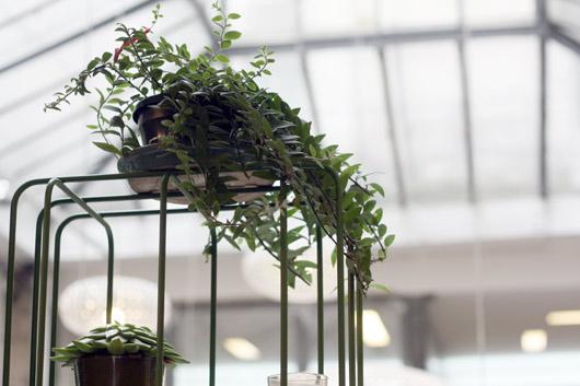 etageres-plantes1