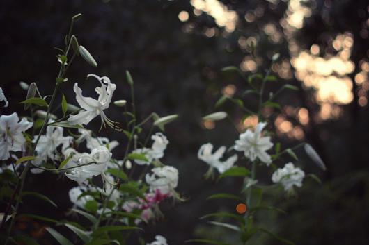 flowers-central-park