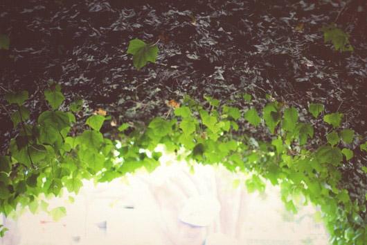 leafs labyrinthe