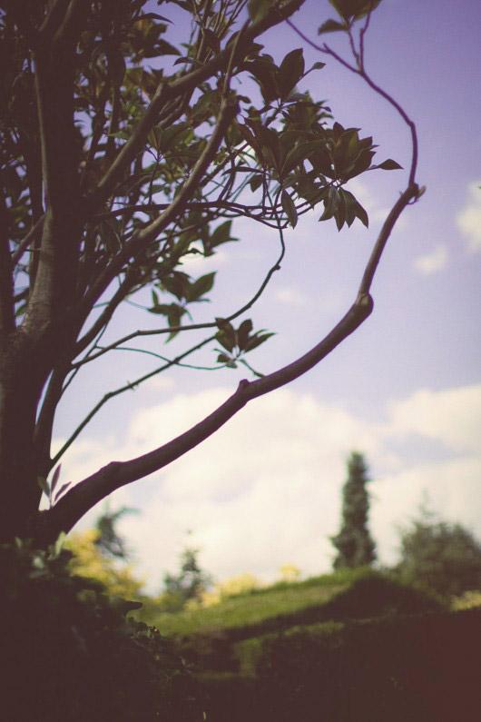 trees labyrinthe
