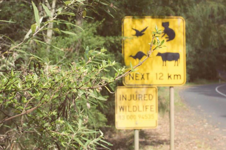 injured wildlife australia