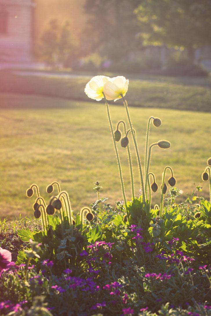 coucher soleil fleurs