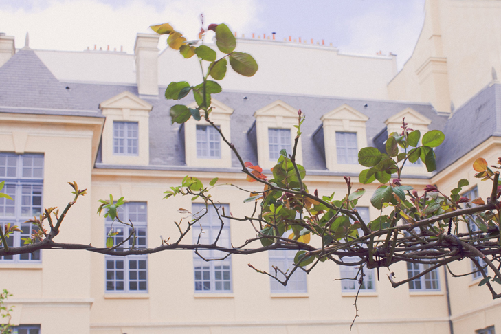 jardin de roses (1)