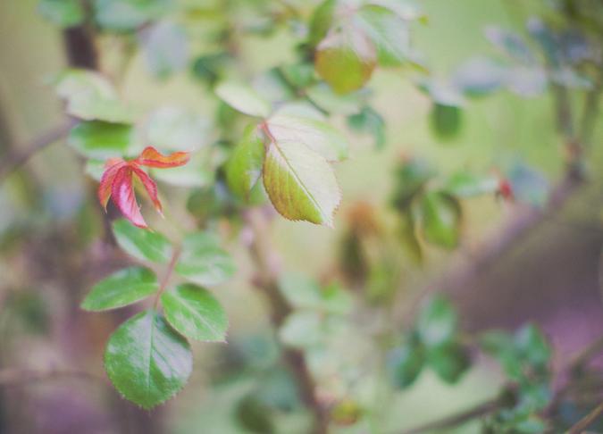 jardin de roses (6)