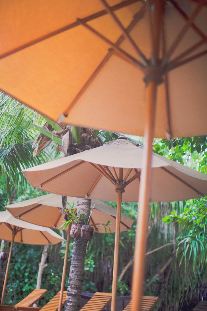 tropical (33)