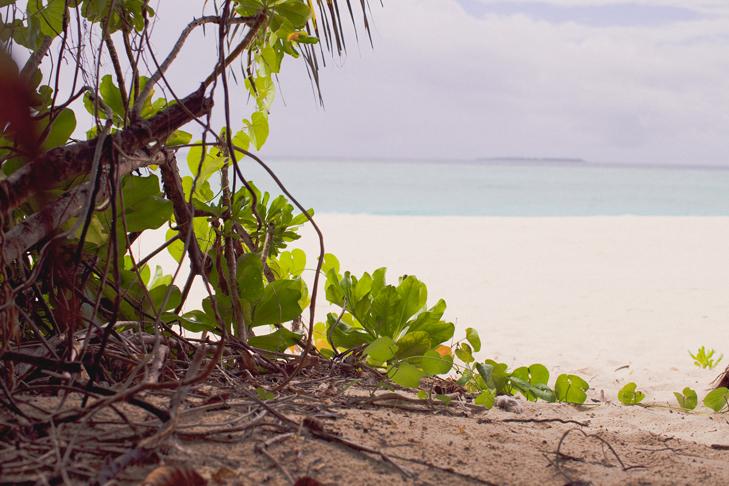 tropical (6)