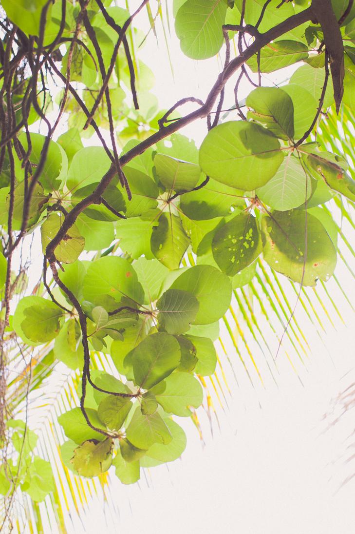 tropical (7)
