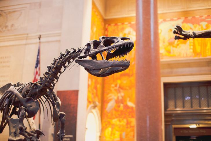 Musee histoire naturelle (1)
