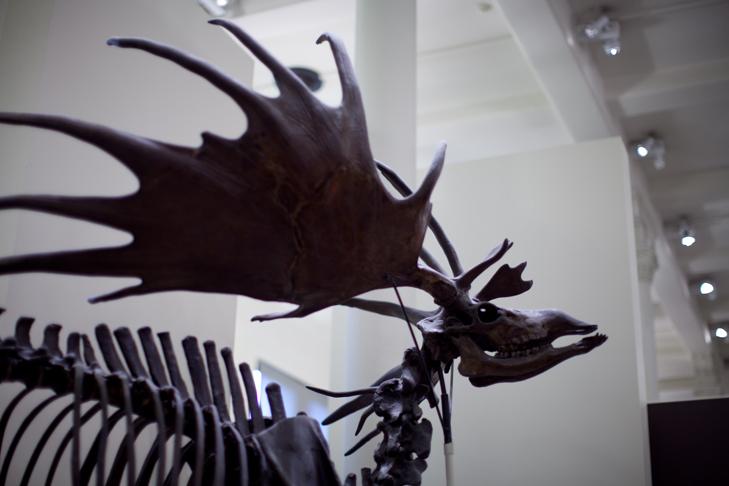 Musee histoire naturelle (9)