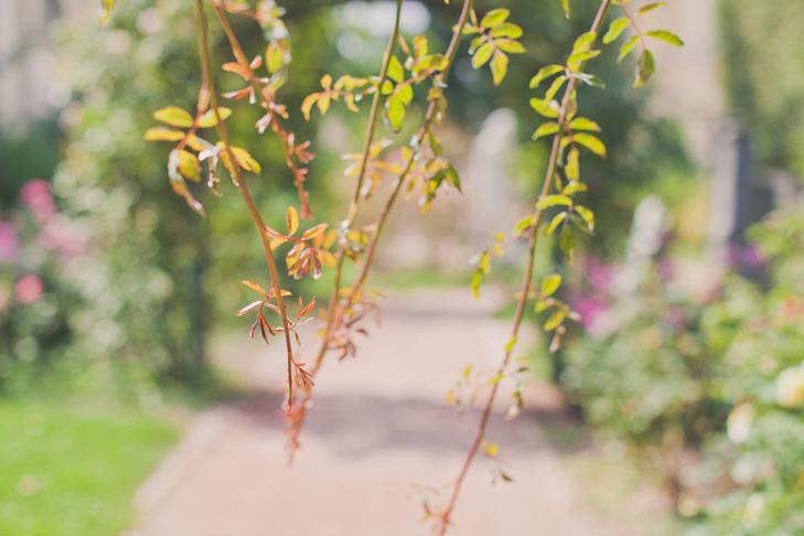 Jardin des plantes (11)