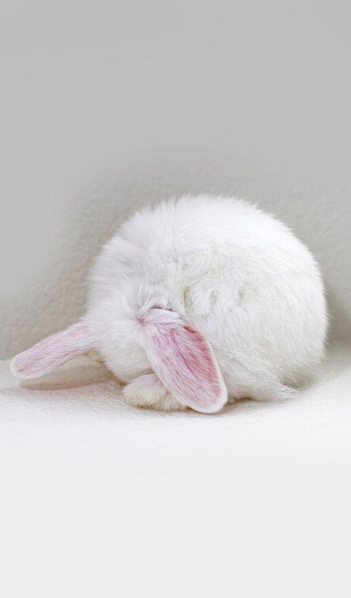 Bunnies (7)
