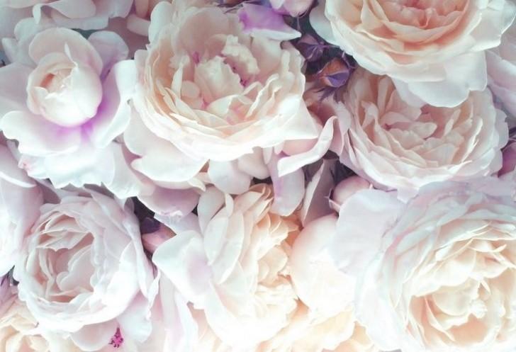 Petite fleur (5)