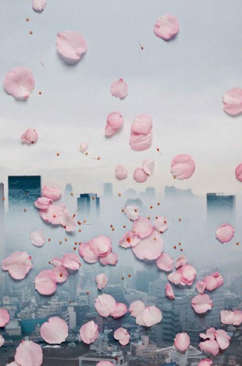 Petite-fleur-(8)