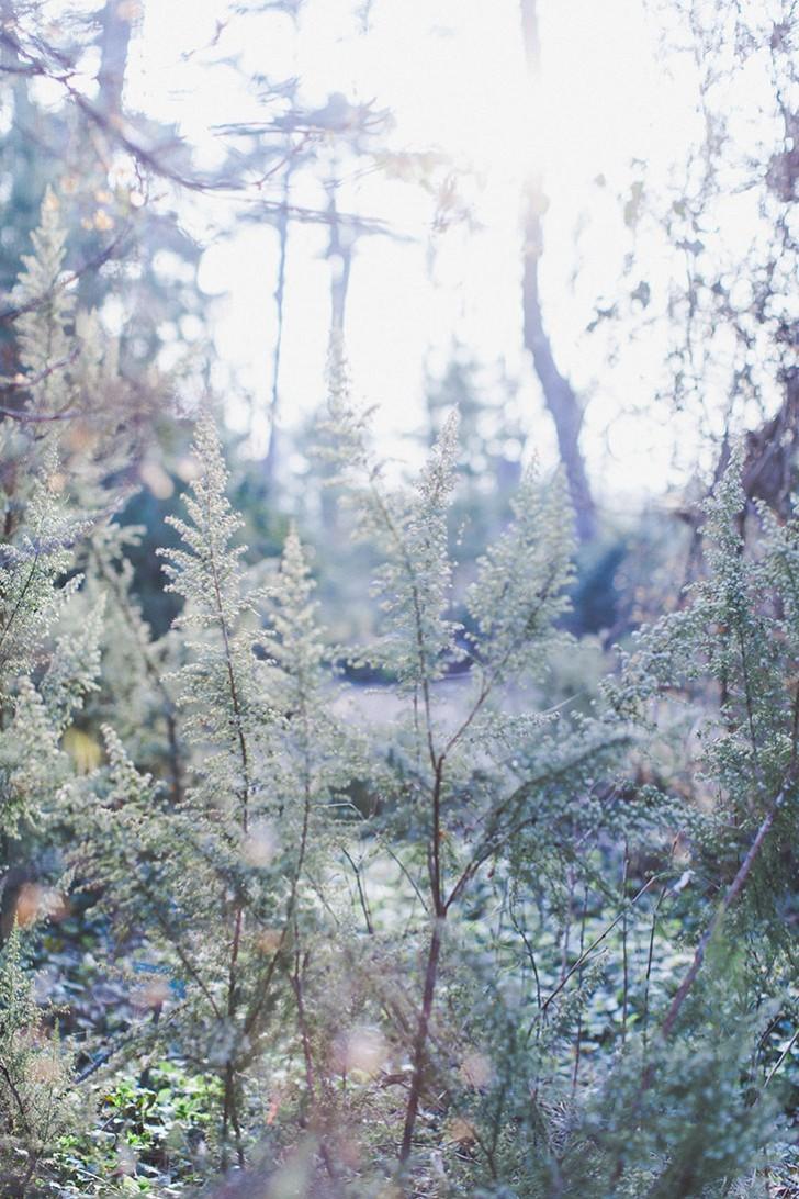 Parc floral de Vincennes-28