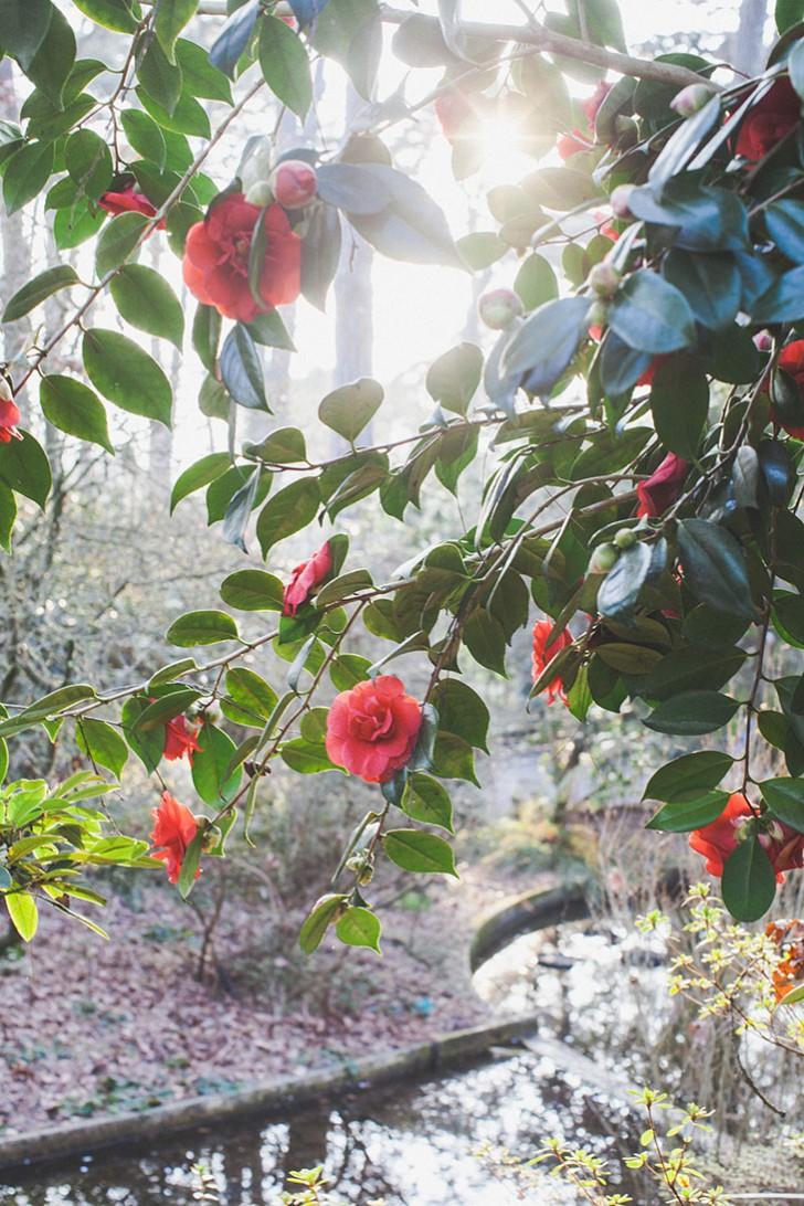 Parc floral de Vincennes-37