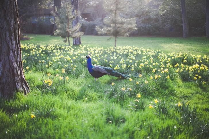 Parc floral de Vincennes-38