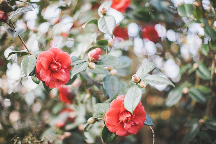 Parc floral de Vincennes-41
