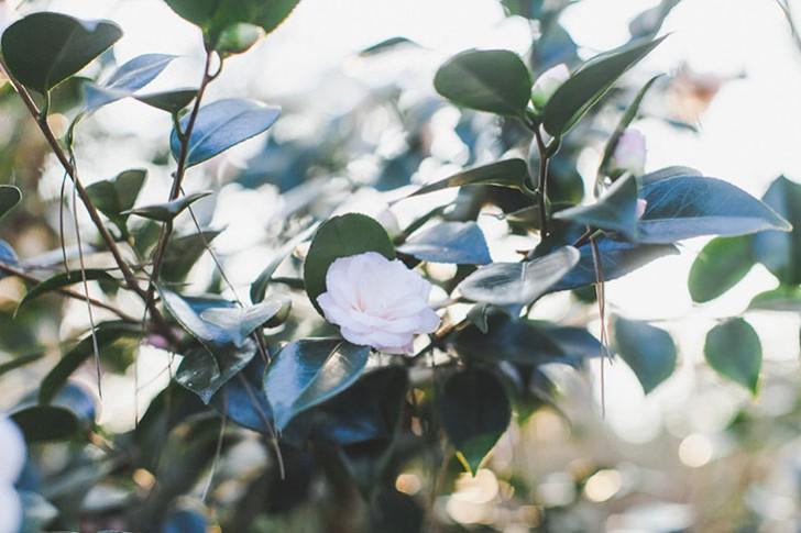 Parc floral de Vincennes-53