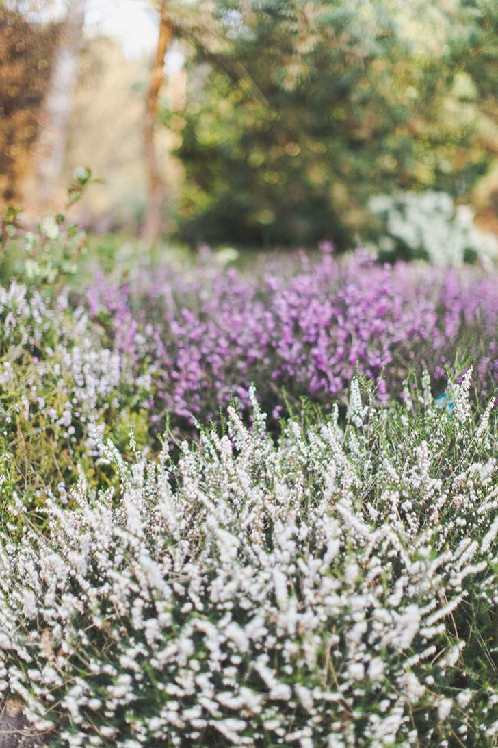 Parc floral de Vincennes-8