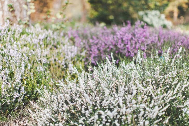 Parc floral de Vincennes-9