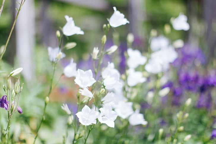 jardin bercy