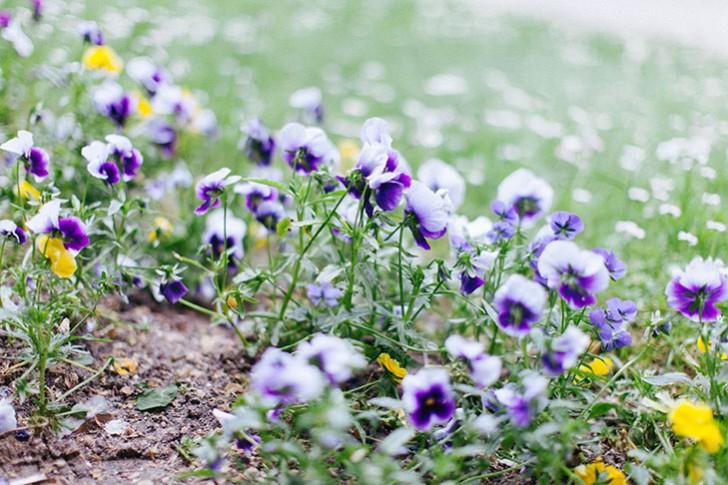 jardin bercy-8