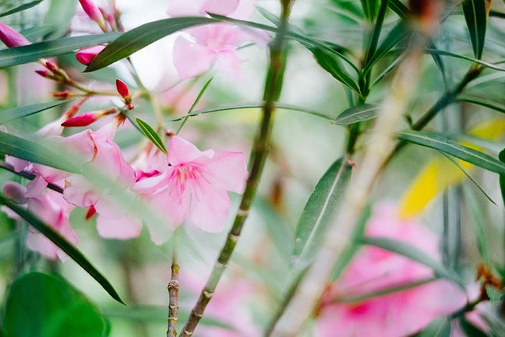 Fleurs00016