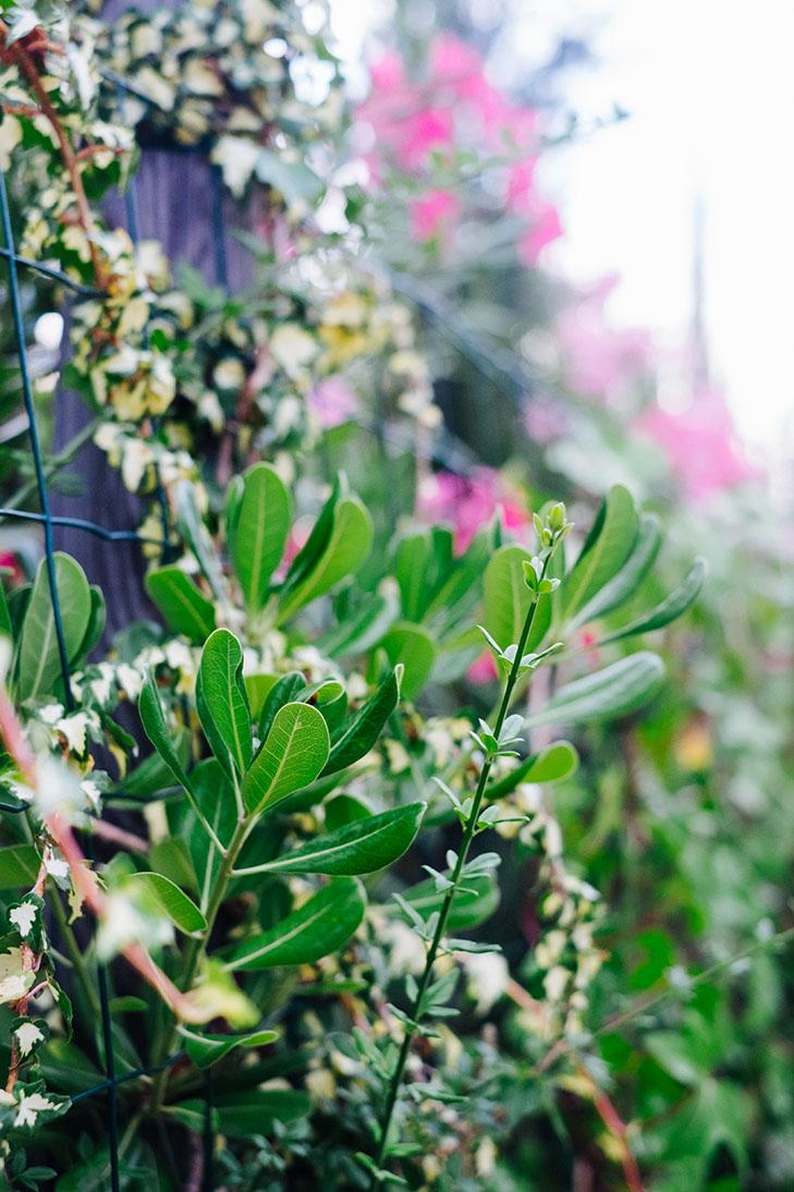 Fleurs00017