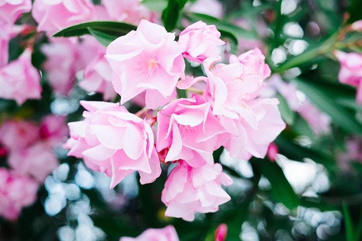Fleurs00025