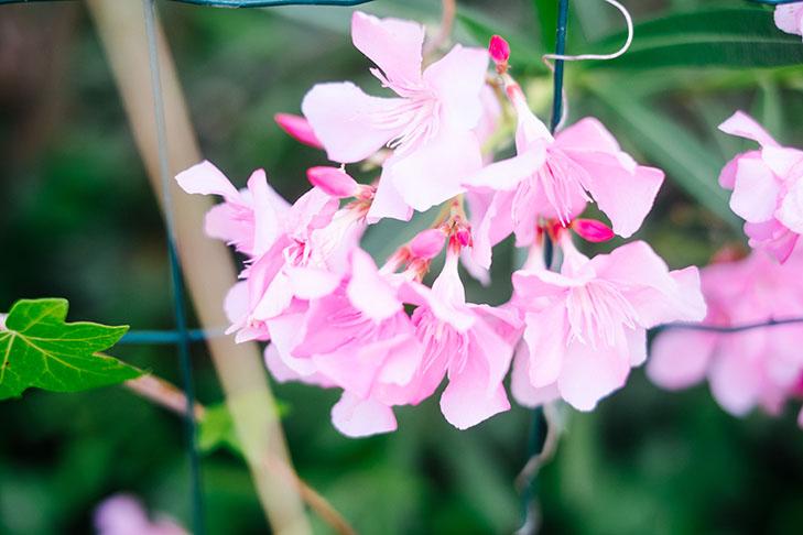 Flowers-31