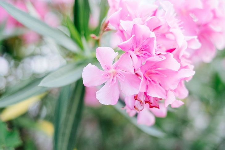 Flowers-32