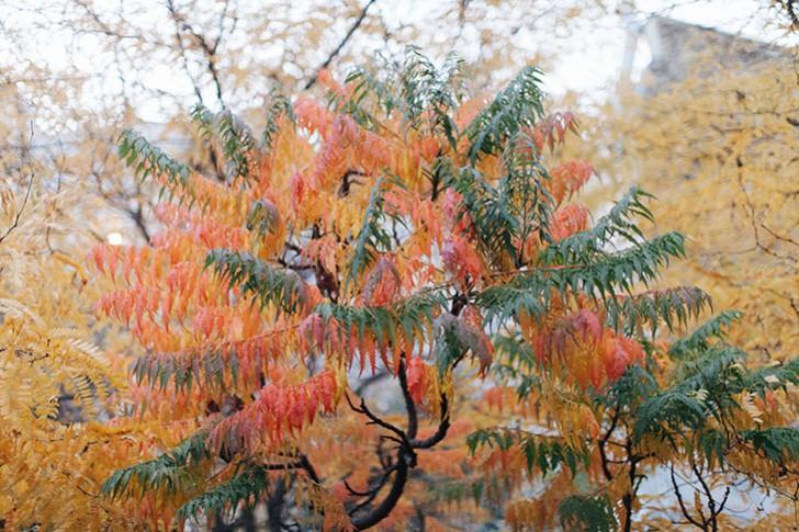 automne-25