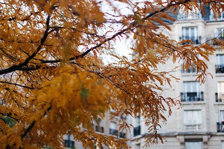automne-27