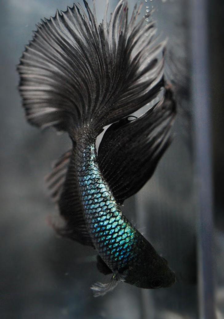 Sirene-00003