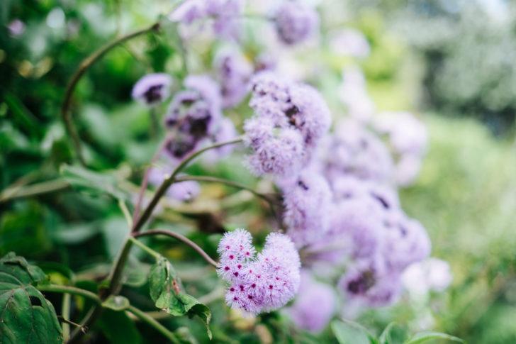 Botanical-garden00003