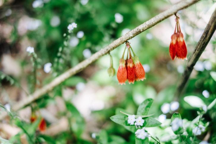 Botanical-garden00009