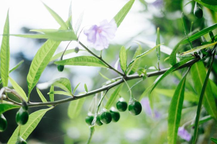 Botanical-garden00015