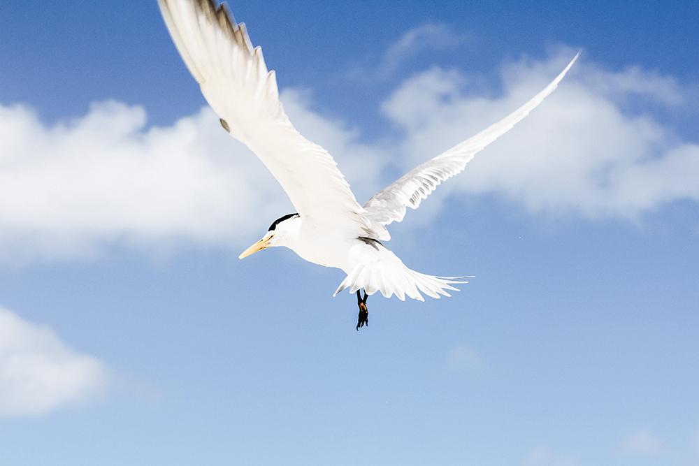 free-as-a-bird-b