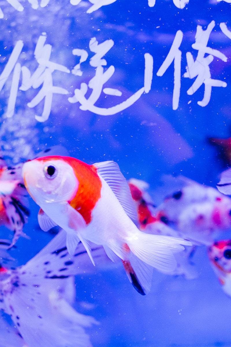 Voyage A Hong Kong Mong Kok 00007