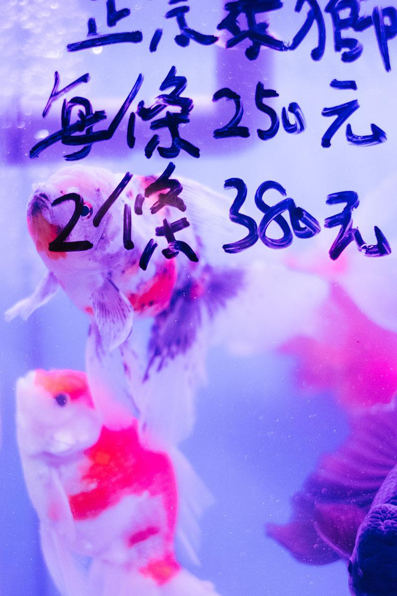Voyage A Hong Kong Mong Kok 00042