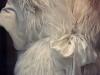 fur-white